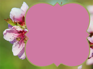 blossonDetail1
